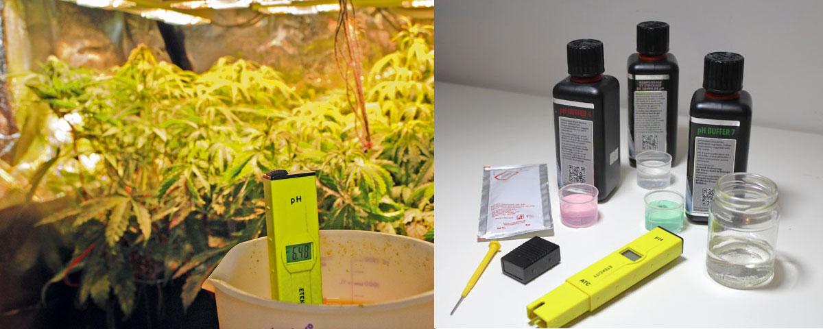 Gut bekannt Growing - Der pH-Wert im Fokus - grow! Magazin DS85