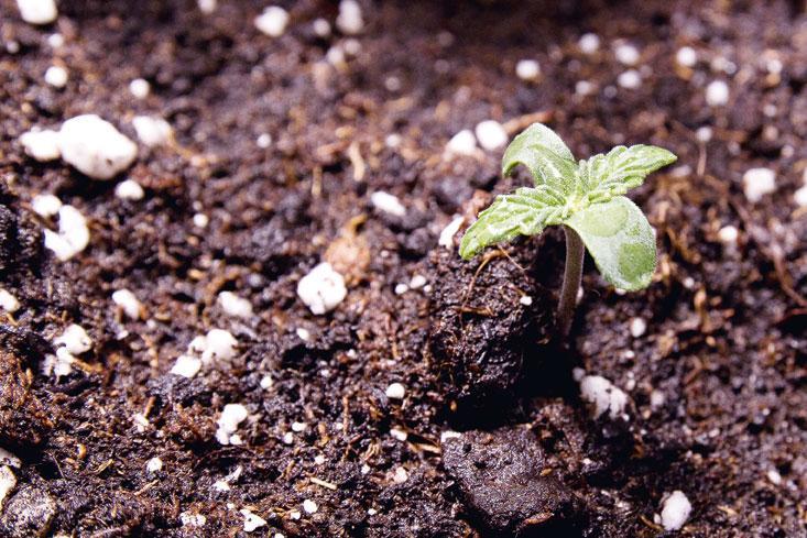 Biologischer Cannabisanbau – Was ist das? - grow! Magazin
